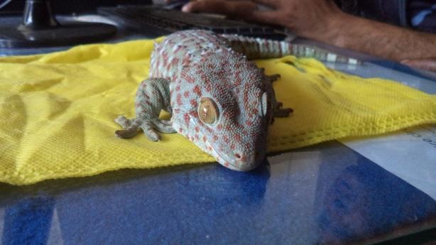 tokyo gecko 1